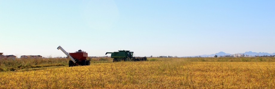 Doing It The Rice Way: My Visit to Lundberg Family Farms